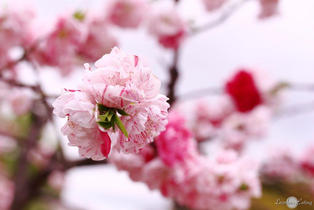 大阪城公園IMG_9648_20160404.jpg