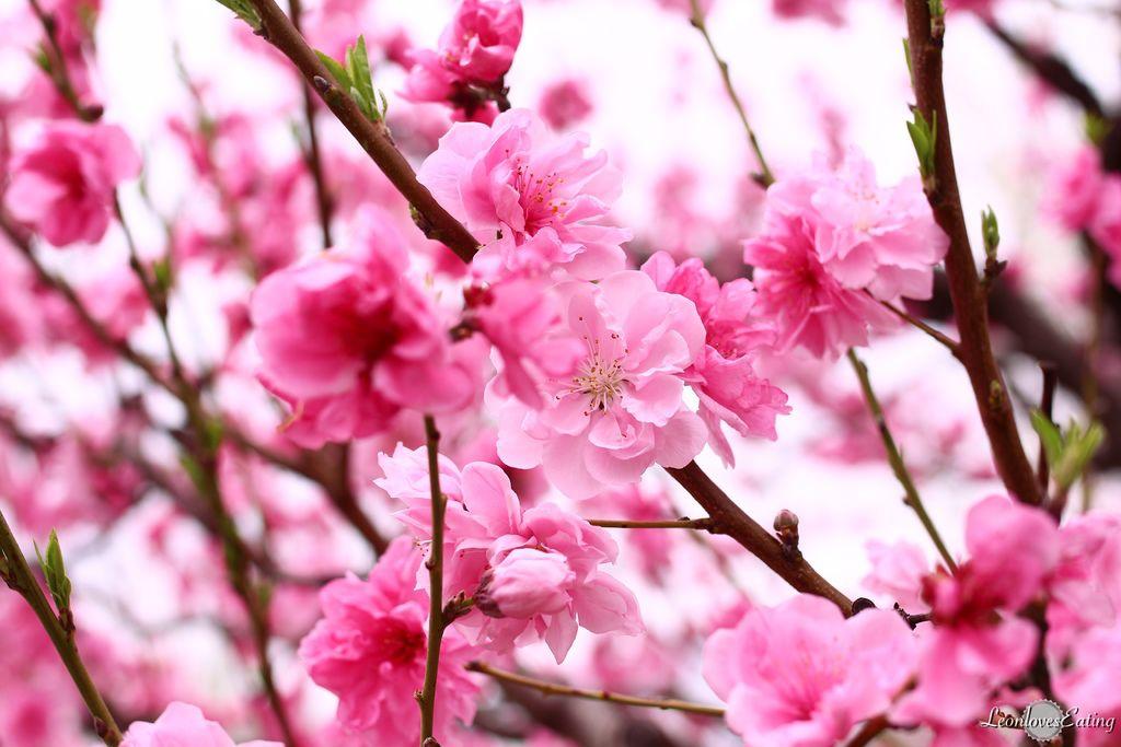 大阪城公園IMG_9650_20160404.jpg