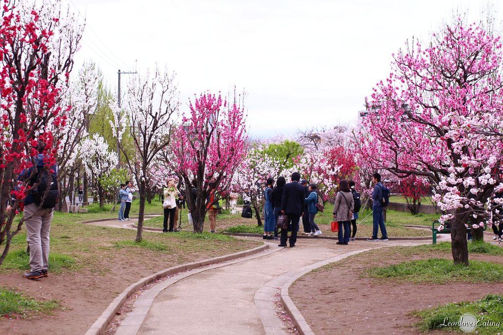 大阪城公園IMG_9641_20160404.jpg