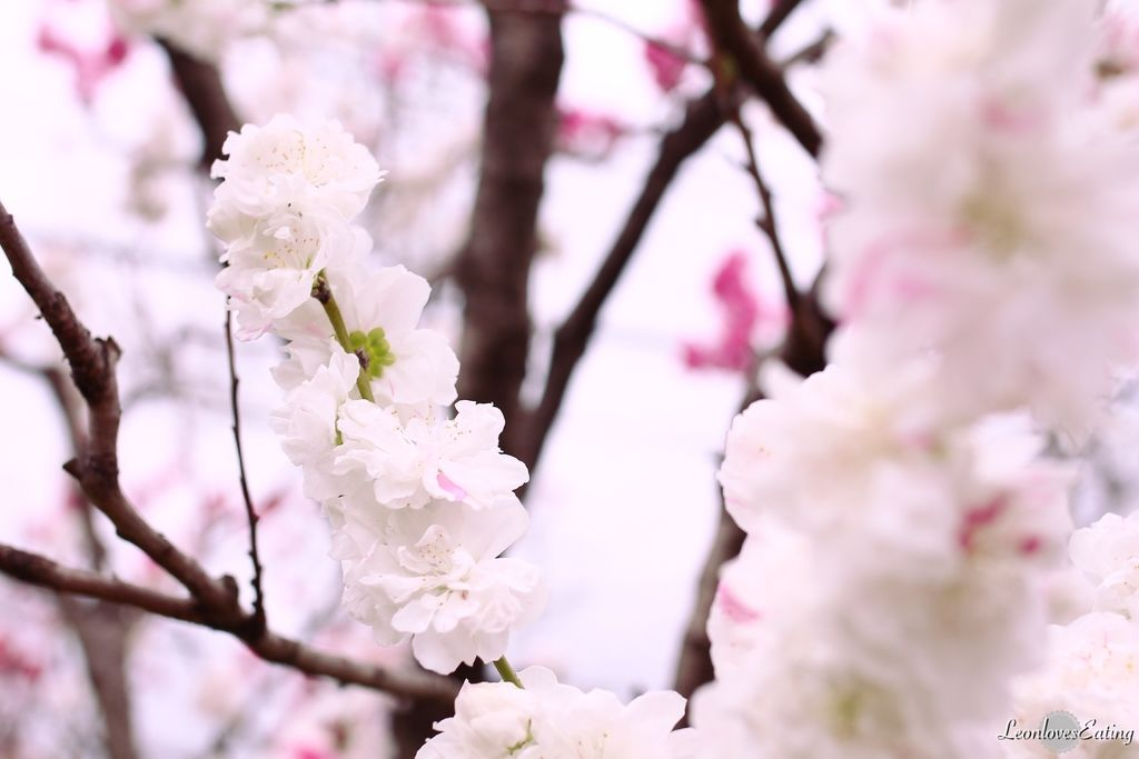 大阪城公園IMG_9661_20160404.jpg