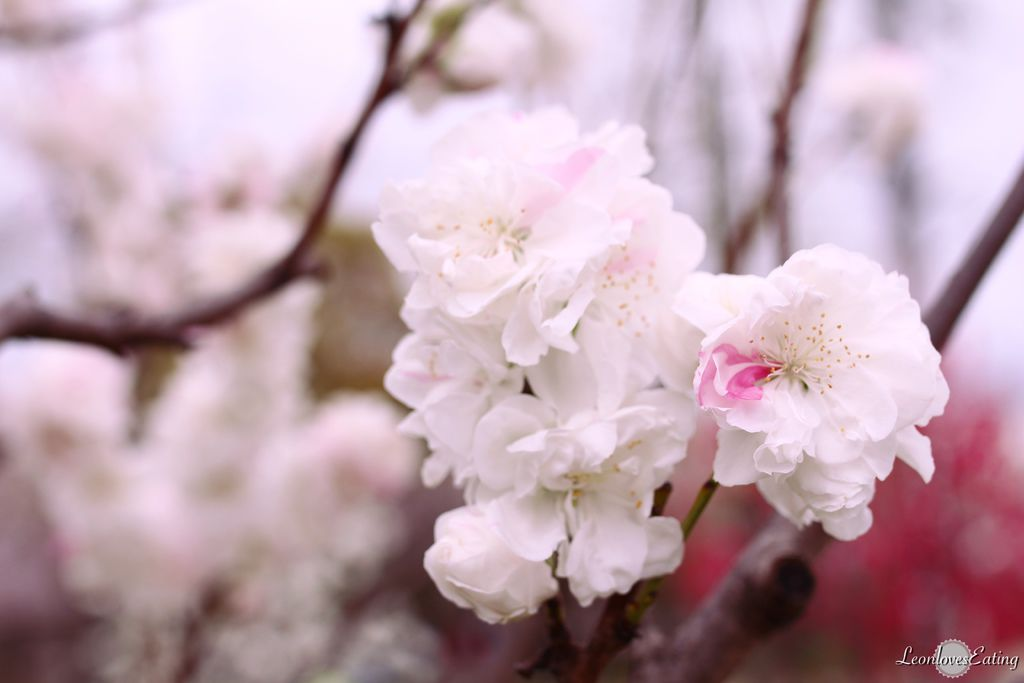 大阪城公園IMG_9662_20160404.jpg