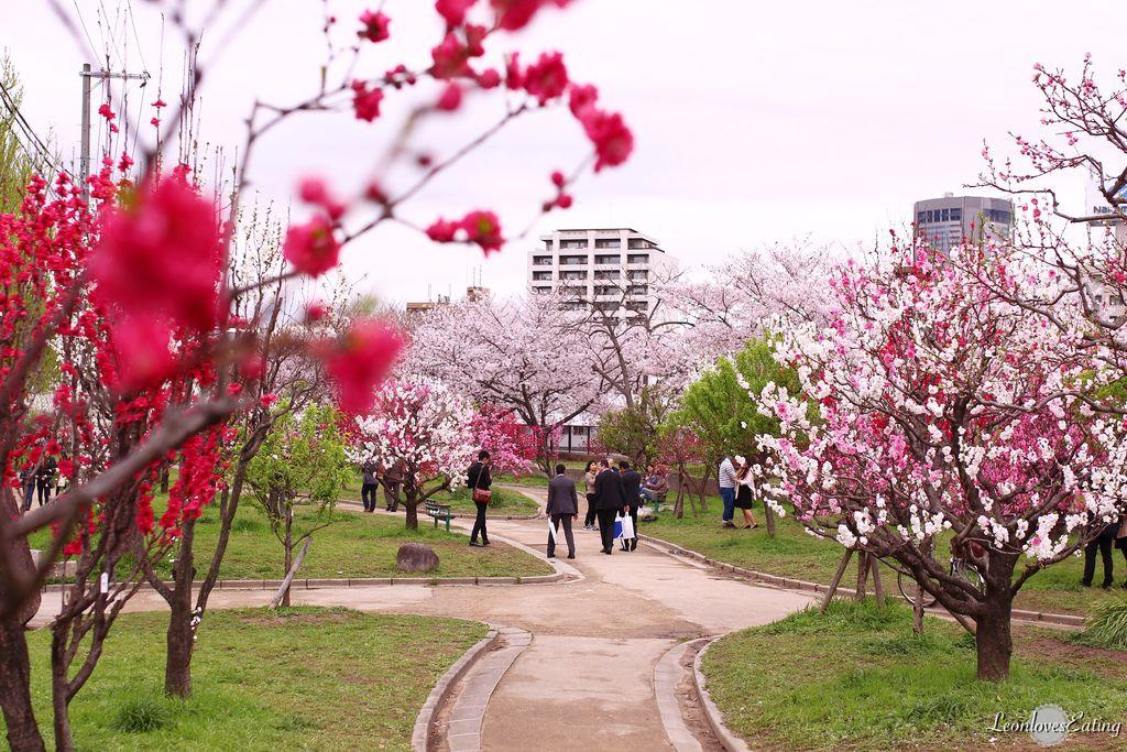 大阪城公園IMG_9664_20160404.jpg