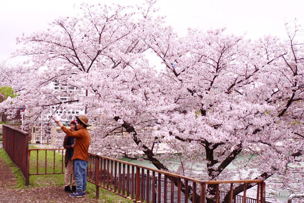 大阪城公園IMG_9669_20160404.jpg