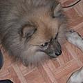 2007-11-25 19-03-49_0050