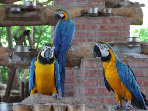 叢林區-金剛鸚鵡
