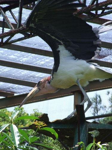 叢林區-大鳥起飛