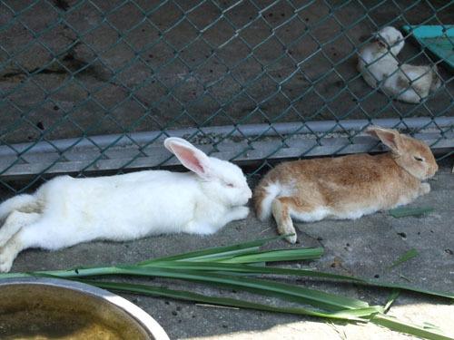 睡懶覺的小兔仔們