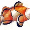 小丑魚.jpg