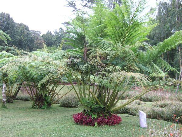植物園1 (8).JPG