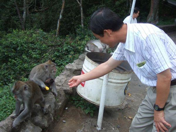 餵猴子 (1).JPG