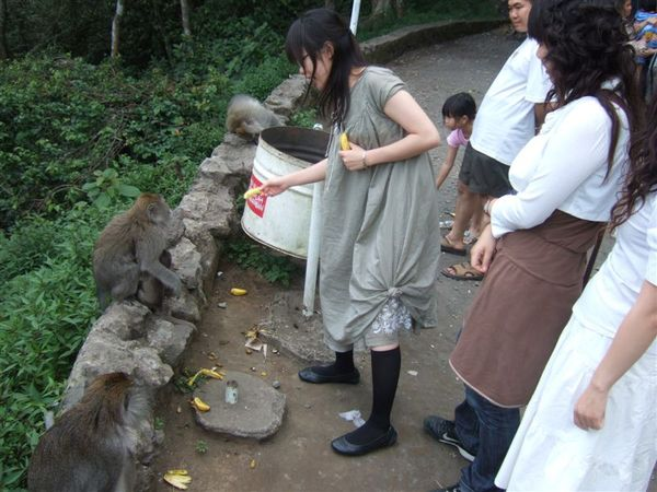 餵猴子 (6).JPG