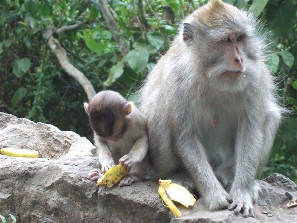餵猴子.JPG