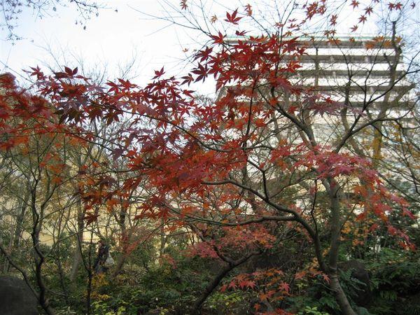 六本木 -毛利庭園(1).JPG
