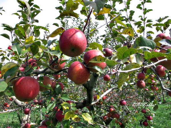 福壽山農場楓紅 Canon G12 027