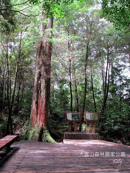 大雪山森林國家公園 2012-09-15 084