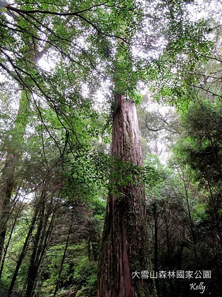 大雪山森林國家公園 2012-09-15 088