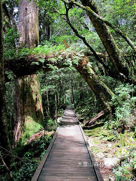 大雪山森林國家公園 2012-09-15 132