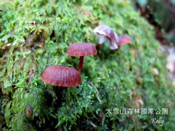 大雪山森林國家公園 2012-09-15 151