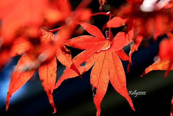 拉拉山.觀星露營區 2012-10-20 012