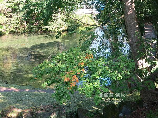 洞爺湖畔,羊蹄山明水公園 (28).jpg