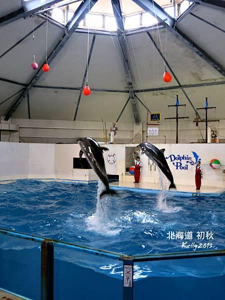 北海道初秋-尼克斯海洋公園 (4)