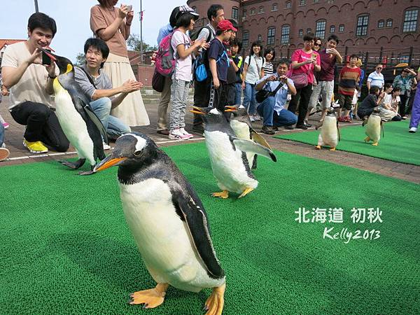 北海道初秋-尼克斯海洋公園 (12)