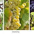 champagne-grapes.jpg
