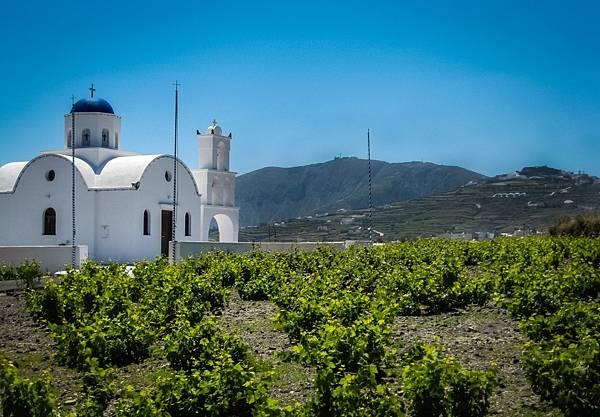 希臘葡萄酒2.jpg