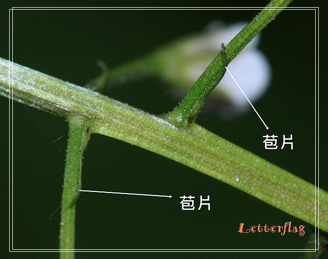 照片 123.jpg