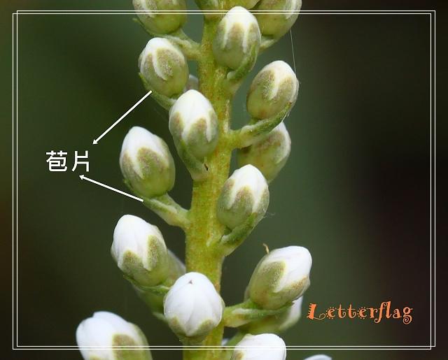 IMG_9370-1.jpg
