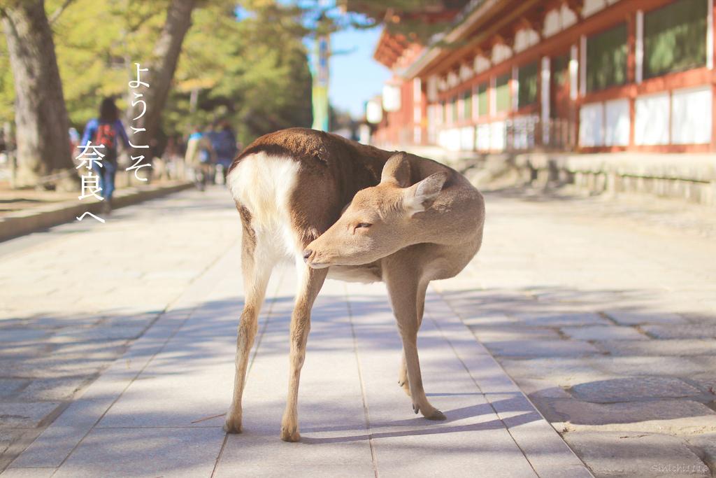 ようこそ奈良へ.jpg
