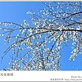 DSC_4352.jpg