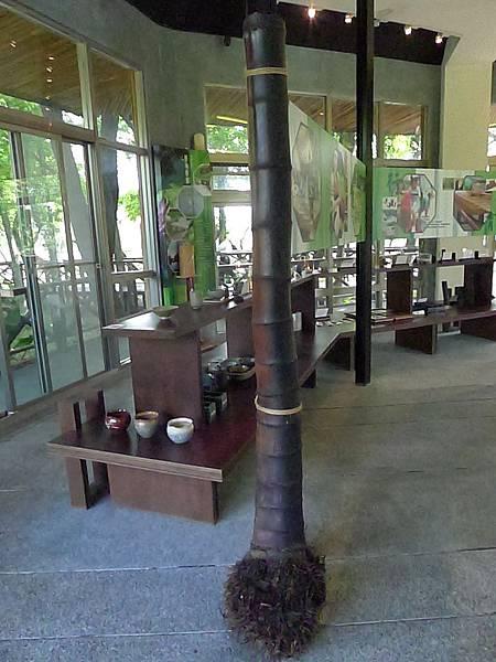 20130307巨竹- (7)