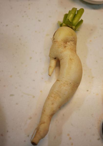 人蔘蘿蔔.jpg