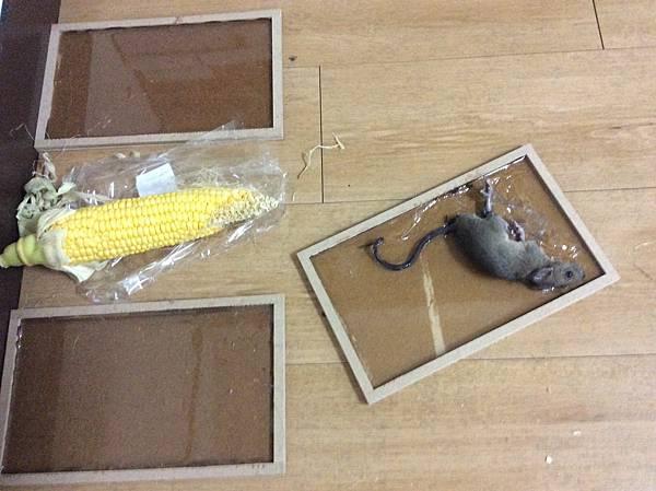 黏鼠板02