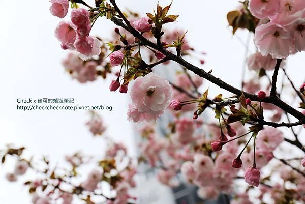 IMG_7464_副本.jpg