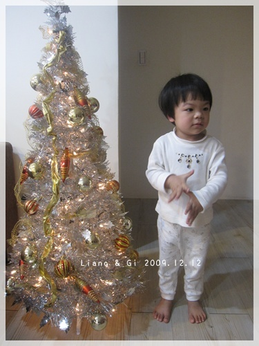 第一次看到家裡的聖誕樹