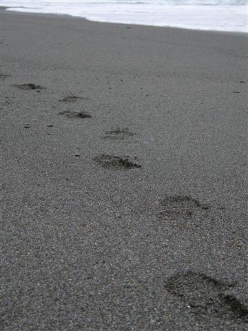 砂頂的腳印
