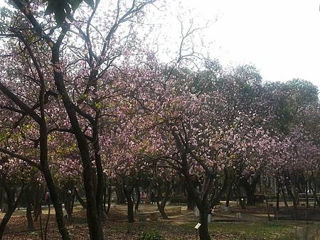 台南公園-7
