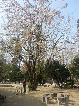 台南公園-3