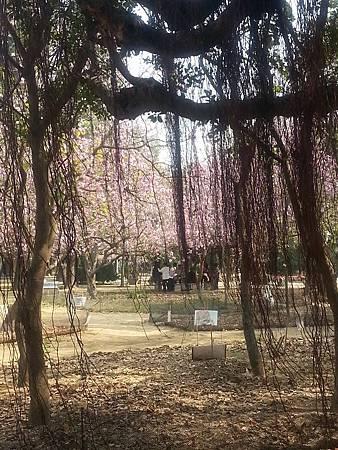 台南公園-6