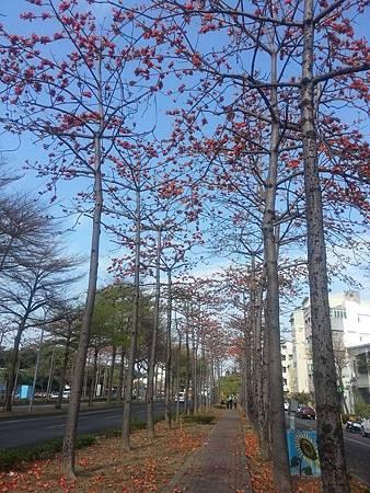 台南市東豐路木棉道