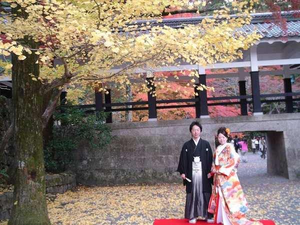 永觀堂---銀杏樹下的幸福