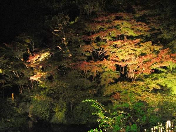 寶池王子飯店-夜楓