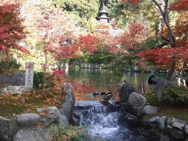 永觀堂---放生池與弁天島