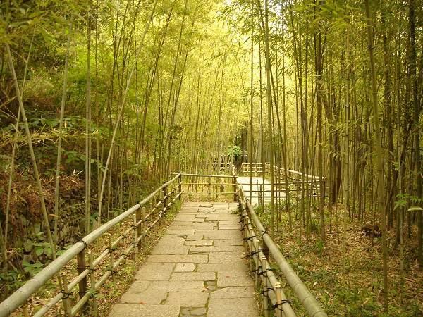 四國村---竹林步道