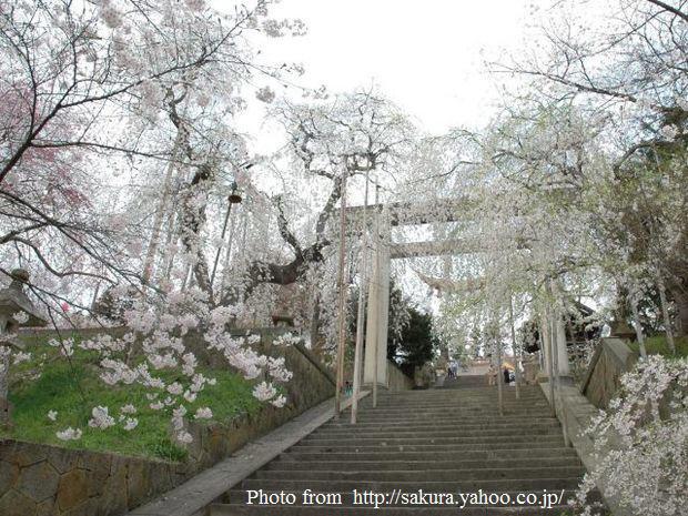 烏帽子山公園-大鳥居