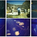 aqua animals.jpg