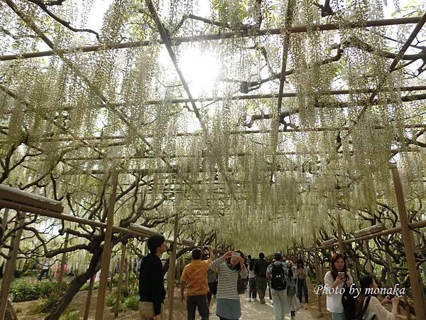 足利花卉公園