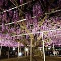 足利花卉公園(夜景)